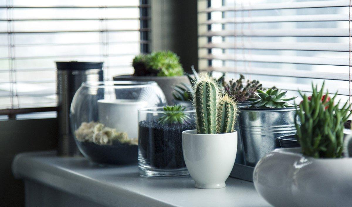 business-ideas-for-2019:-macramé-and-houseplants